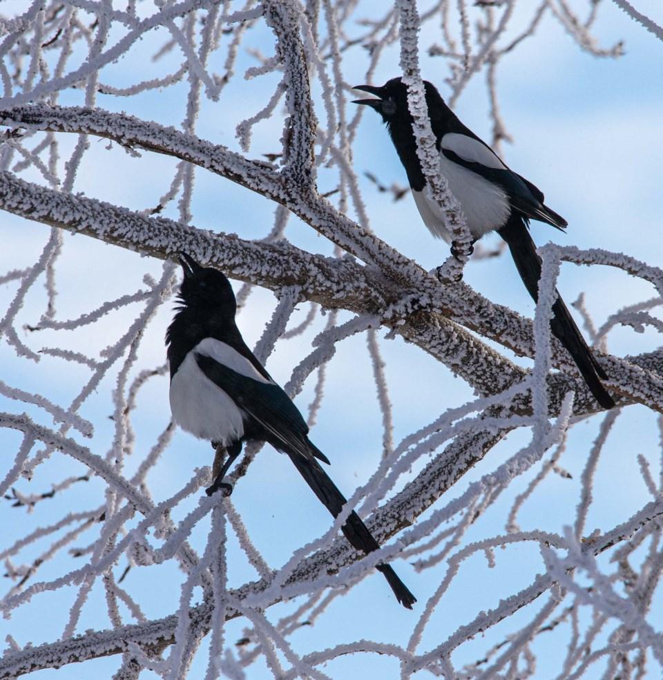 SA ice and birds CC 0603-GPL-NR-001