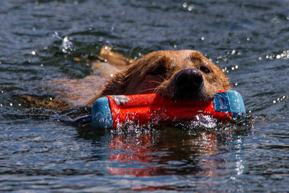 SA or IG lacombe lake dog swim CC 5574