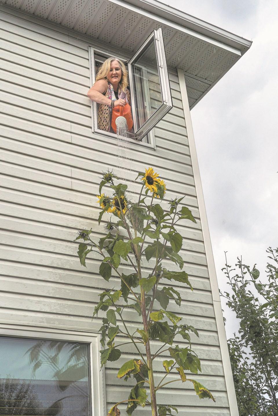 SA sunflower FRONT CC 5082