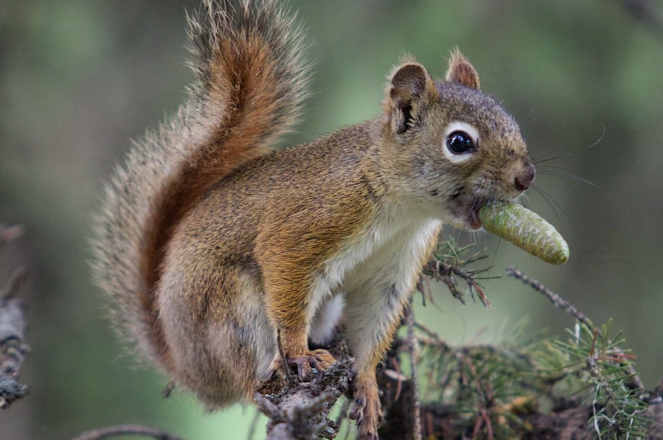 squirrel snacking-BY-3043 CC