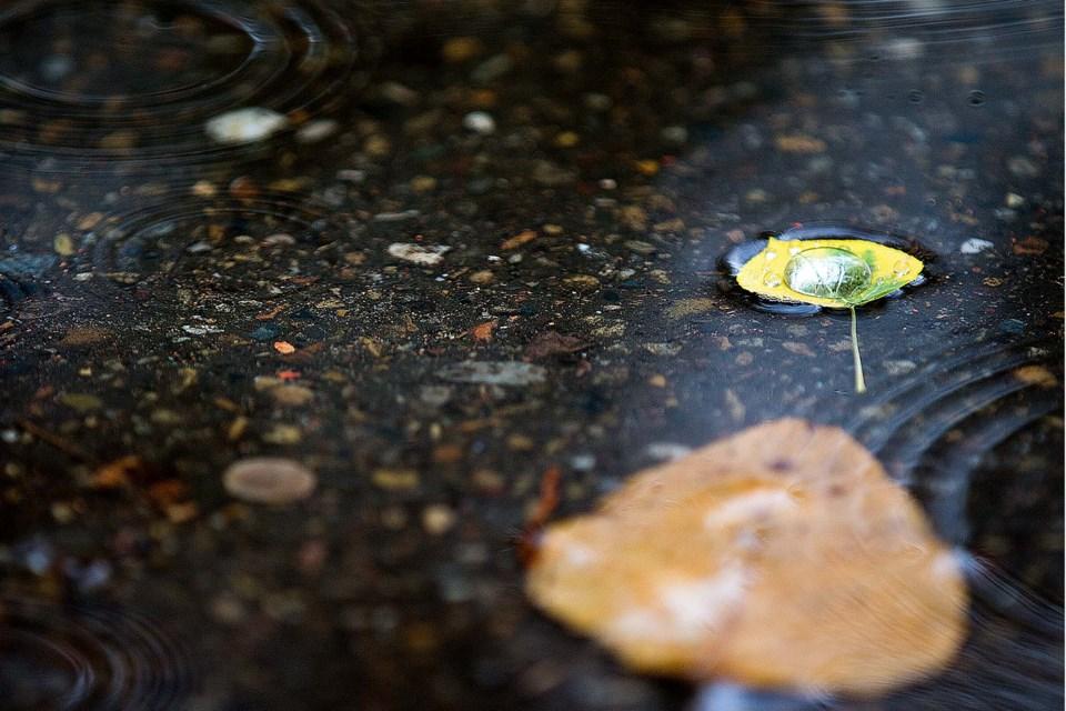 SA rainyday BY 5886 CC