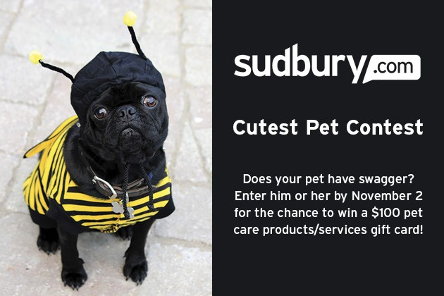 cutest-pet-image