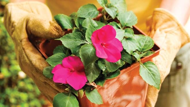 150517_gardening