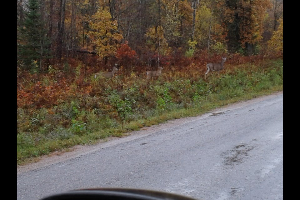 Gil Guerin of Espanolasnapped this photo in the paper town earlier this month of a doe and two fawns.