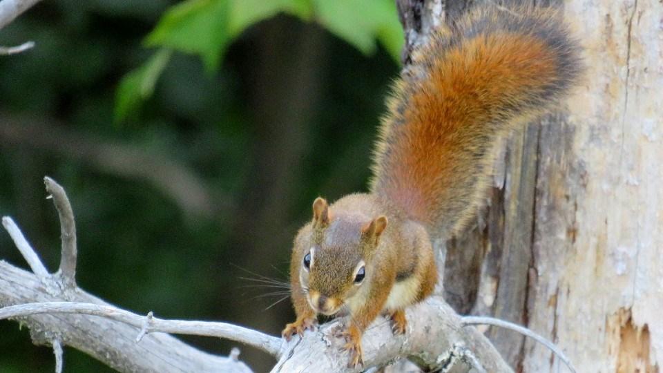 070921_barry-denise-kitchin-squirrel crop