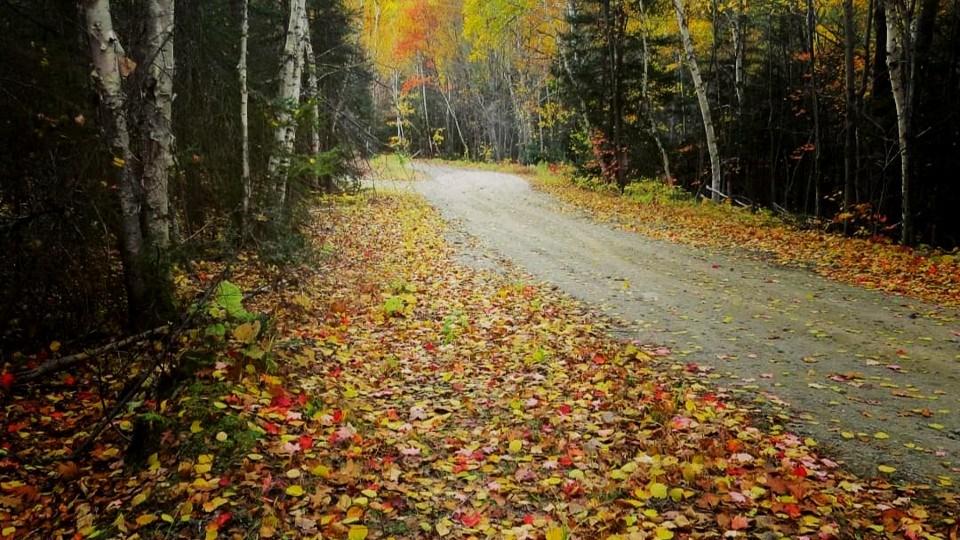 131021_denise-kitchin-fall scene crop