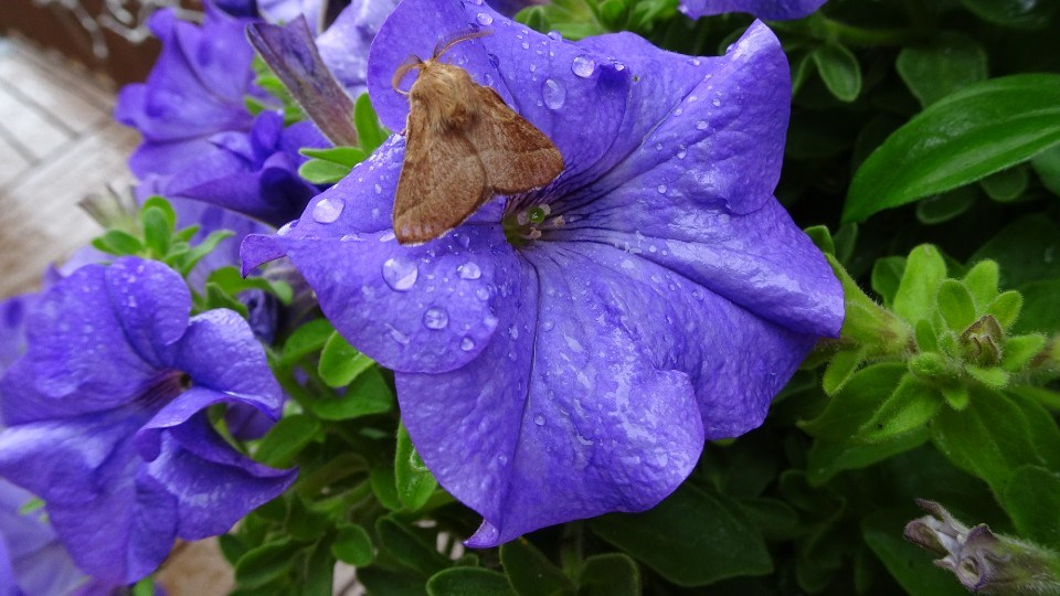 190821_linda-derkacz-moth-flower-crop
