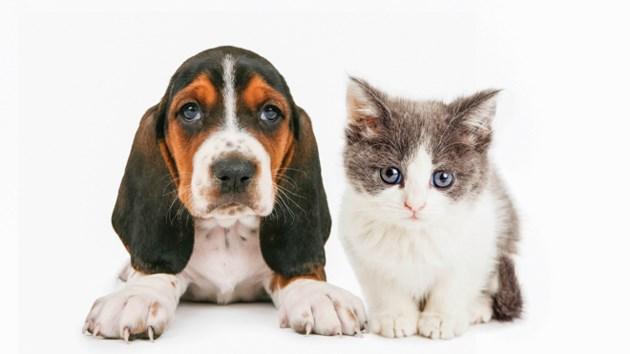 231118_puppy-kitten