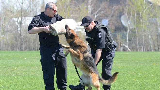 Canine_Unit_demonstrationSized
