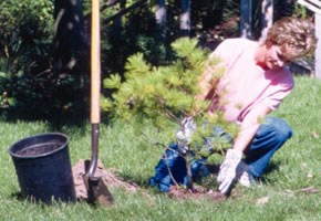 tree_seedling_290
