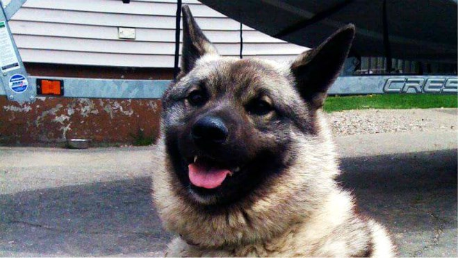 Tonka, elkhound killed in Lively