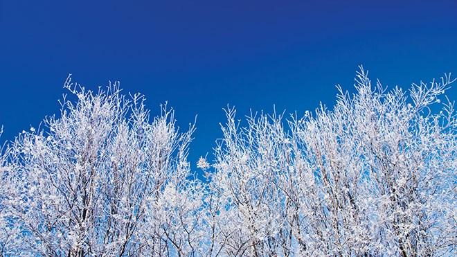 WINTER_frostyTrees
