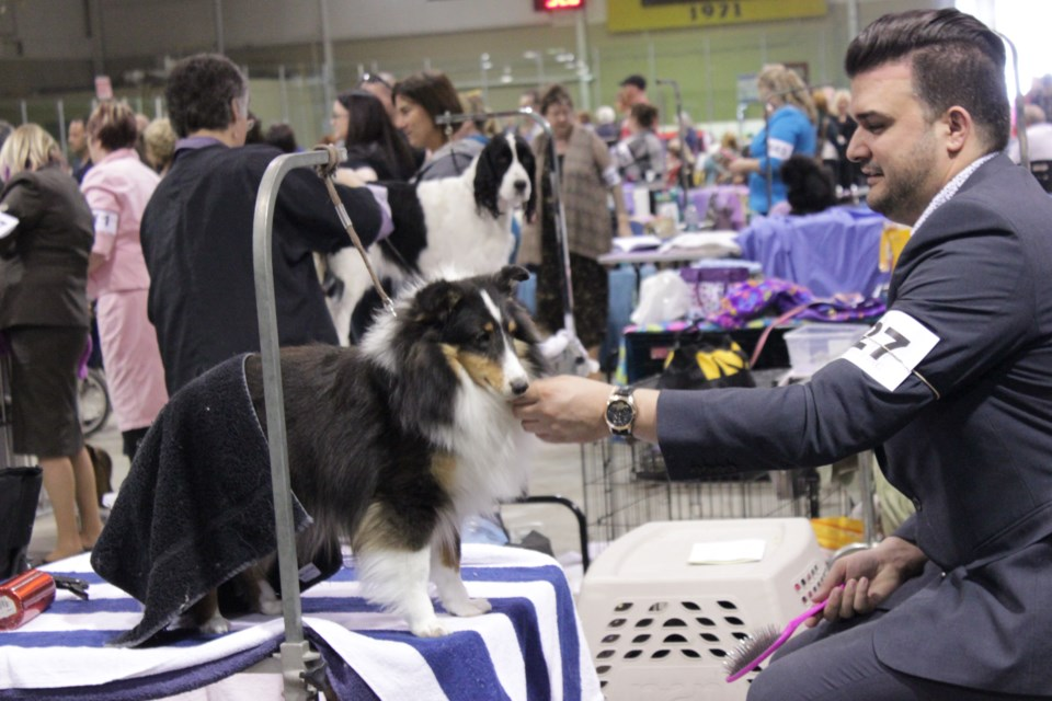 Dozens of primped pooches were on display today at the Nickel District Kennel Club Dog Show in Coniston. The show continues tomorrow at the Toe Blake Arena from 9 a.m. to 4 p.m. (Callam Rodya/Sudbury.com)