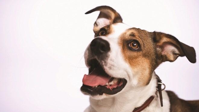 260615_doggy660