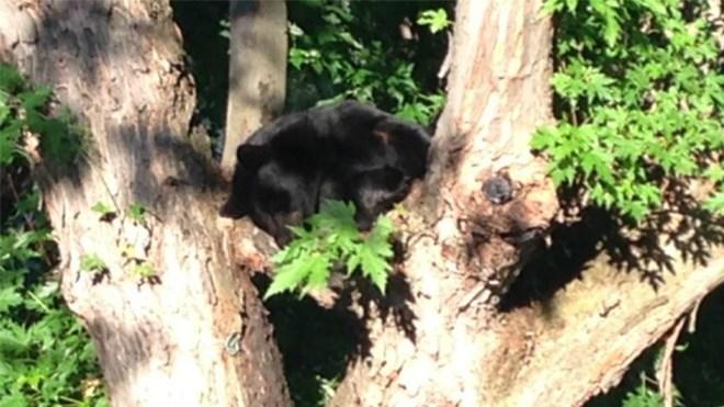 210815_sleeping_bear