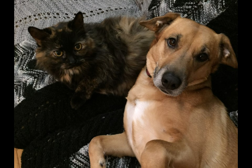 An Espanola family is reeling after the family dog, Pepper, was found shot and killed. (Supplied photo)