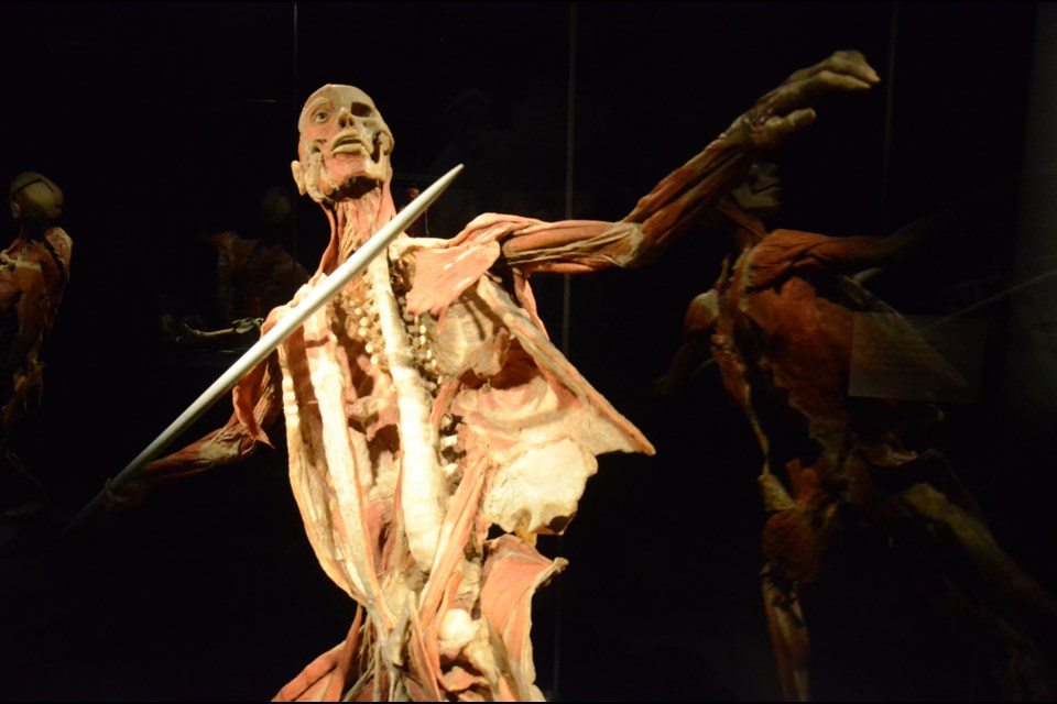 Look At Yourself And Every Other Human In A Whole New Way Body Worlds Is Back Sudbury Com
