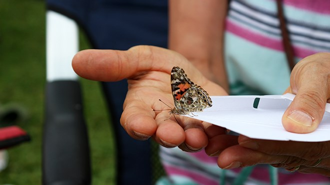 180819_KF_hospice_butterfly_sized