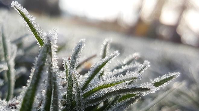 080919_KF_frost_sized