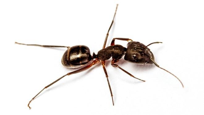 270919_ant-crop