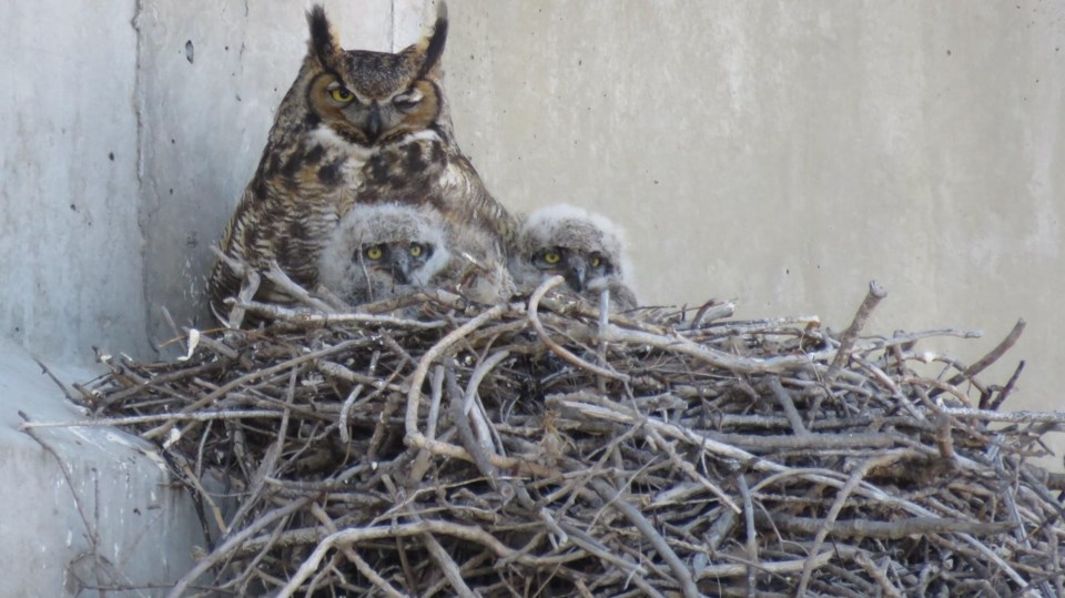 270420_GC-owls-in-focus4