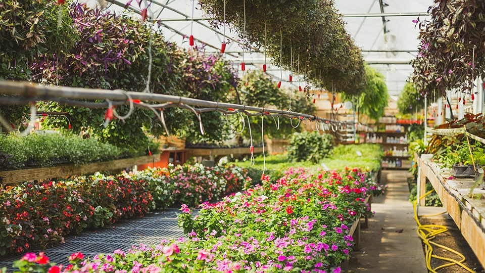 Certain businesses allowed to reopen under strict safety guidelines across Ontario, including garden centres and nurseries. (File)