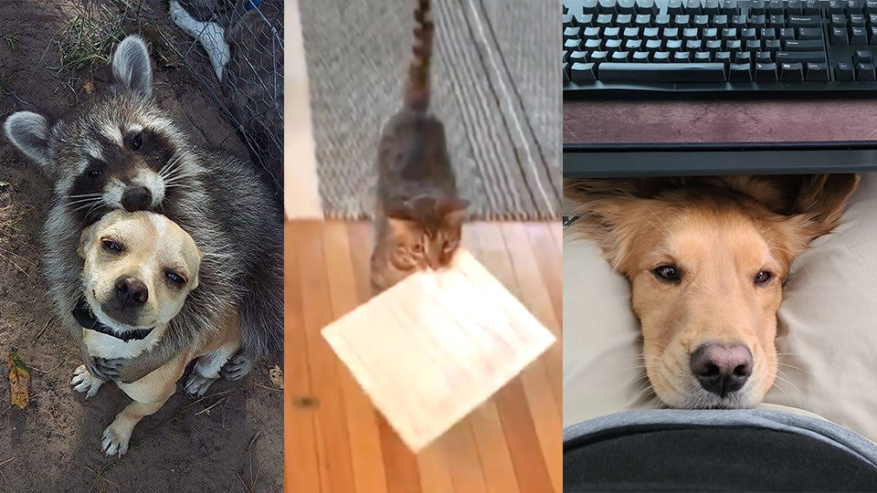 VILLAGE VIDEO: Never a dull moment when these furry co-workers are on duty
