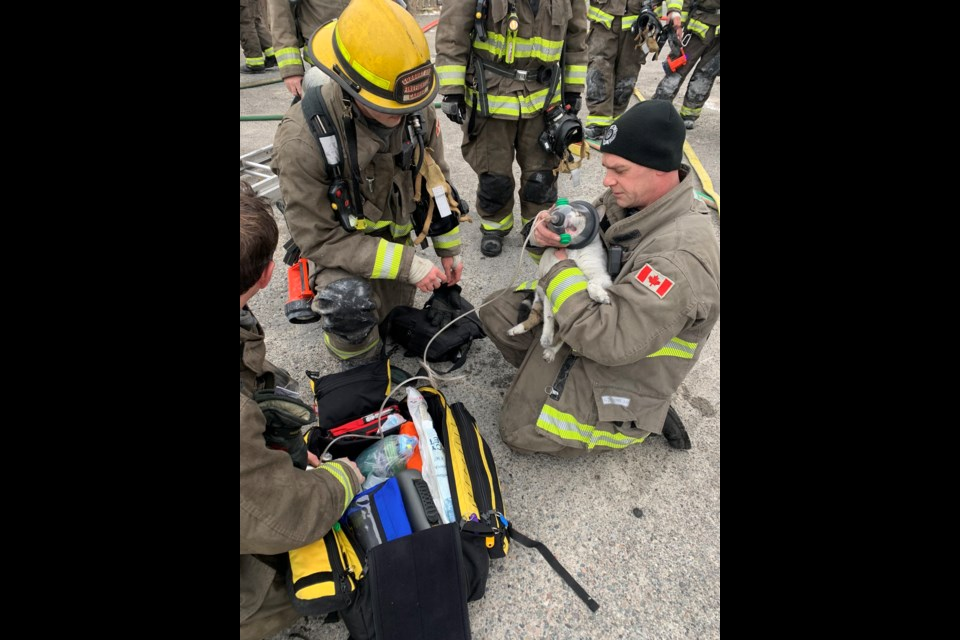 Firefighter Mark Muldoon applies oxygen to a cat trapped in an apartment building fire on King Street Monday morning. (Supplied/Jesse Oshell)