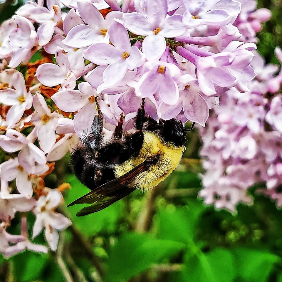 020621_Bee