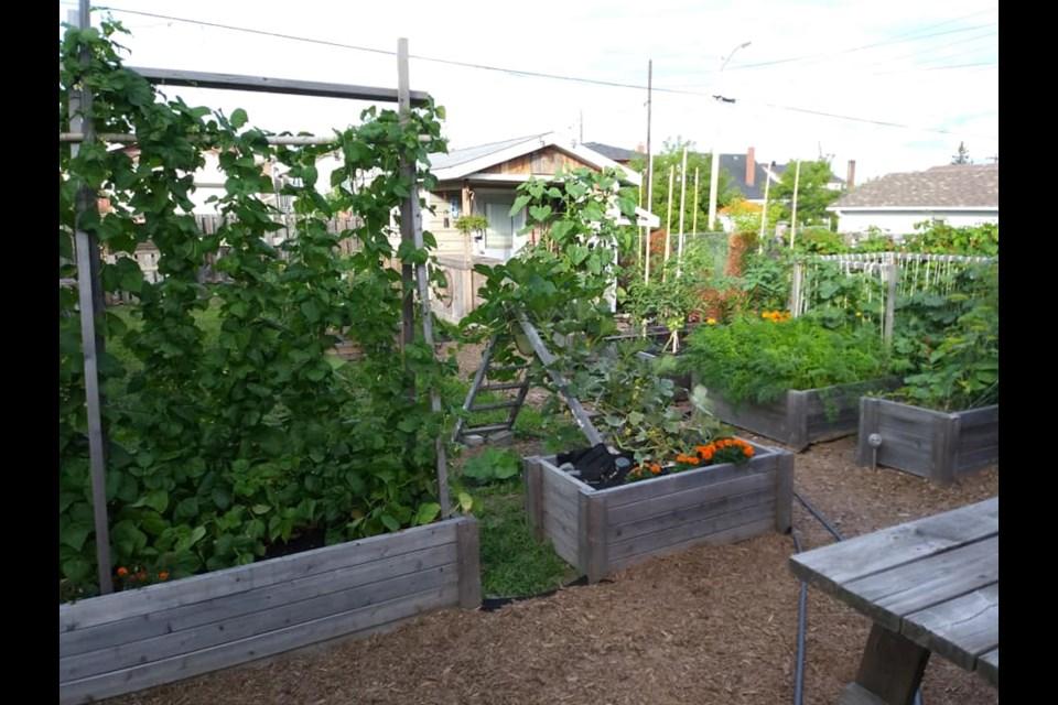 Jenny Lamothe's backyard garden.