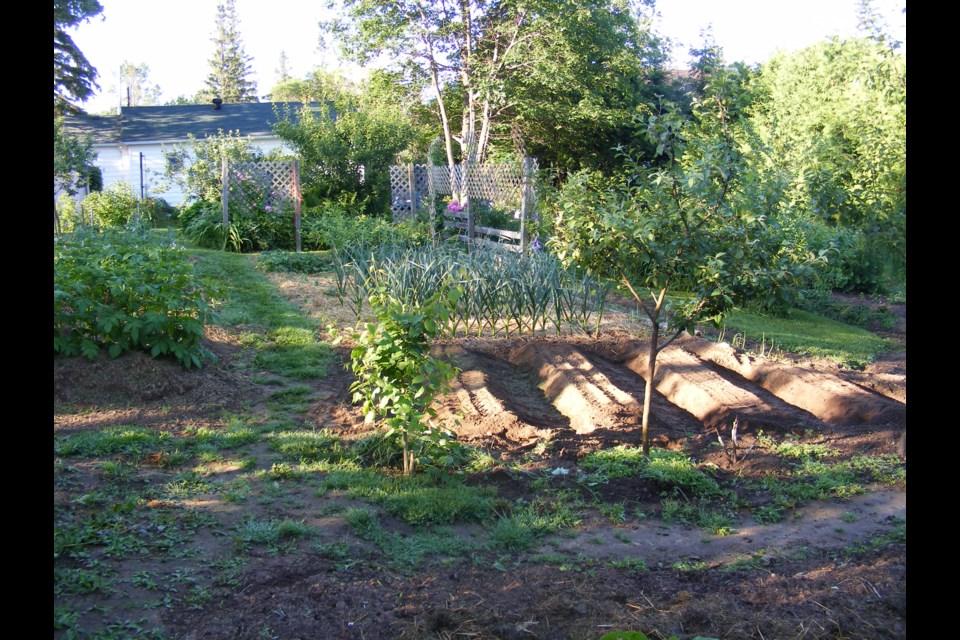 Ron Lewis' garden.