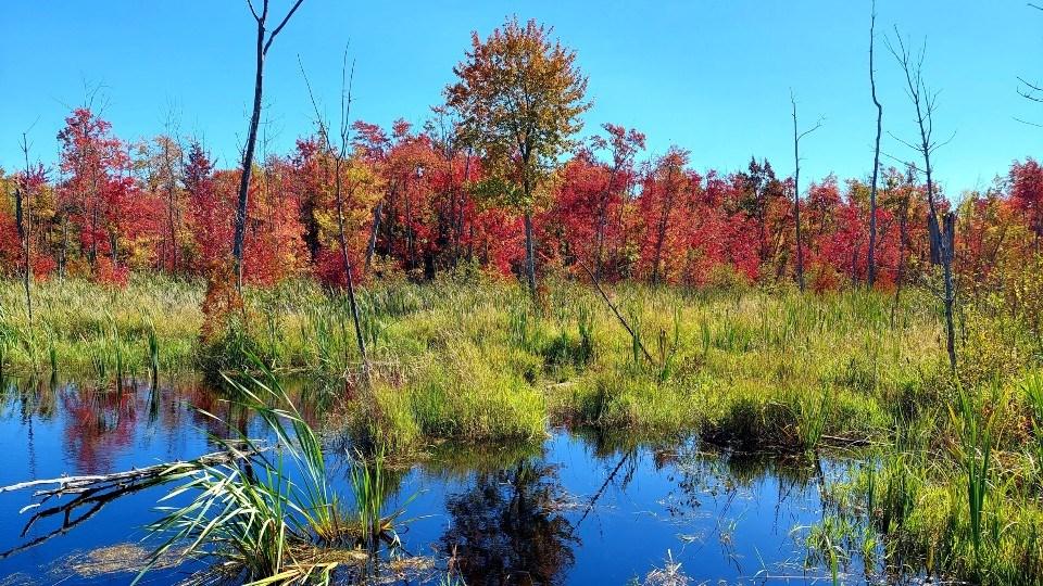 210921_lynne-houle-fall-coloursSized