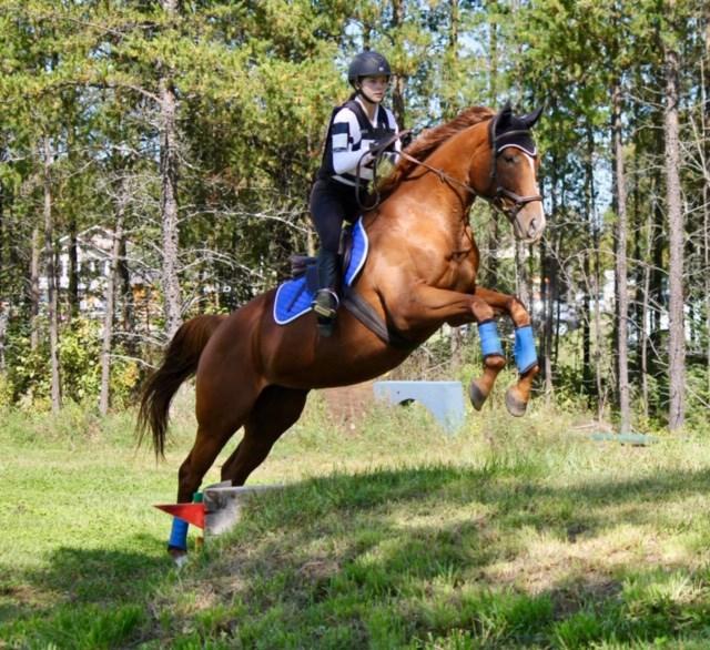121119_equestrian