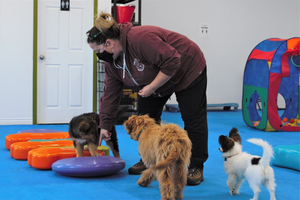 Tammy Williams is the owner and head trainer of Pawsitively Social Canine Adventures. (Ian Kaufman, tbnewswatch.com)