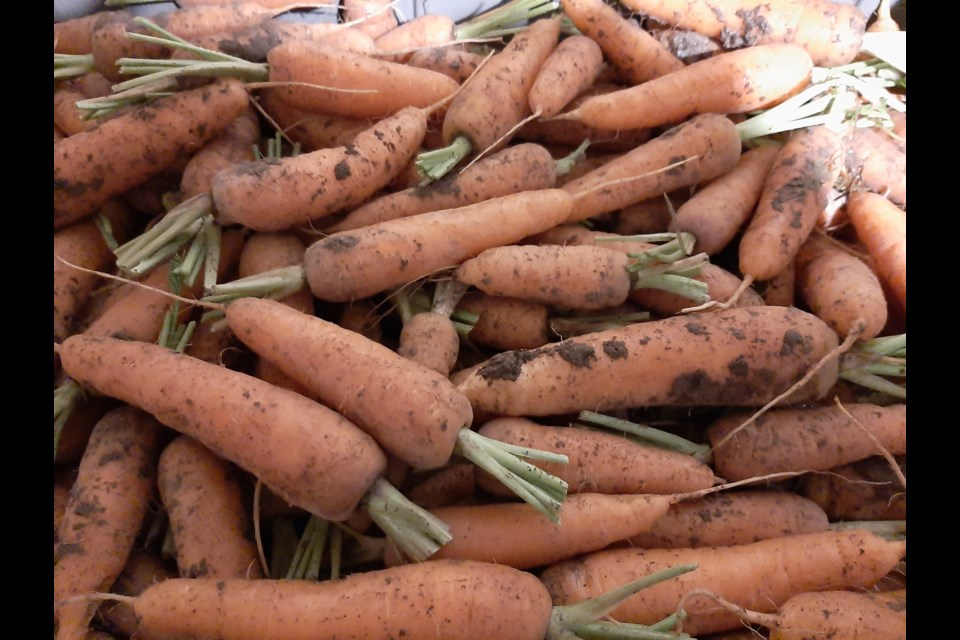 Carrots are biennial so the roots are harvested and stored all winter, then replanted the following year.