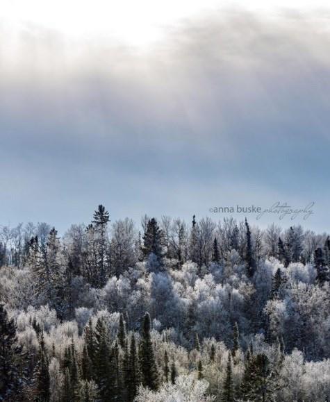 anna.buskephotography20210112
