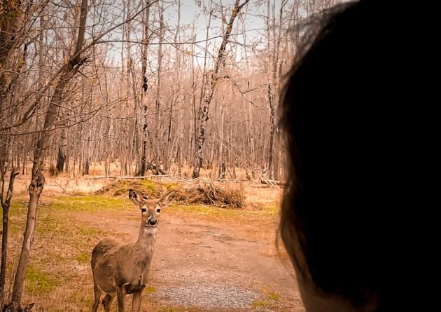 Deer Paula-1