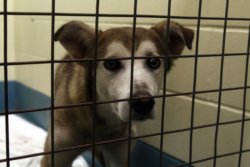 The health of 12 dogs rescued near Longlac has been improving steadily over the last two months.