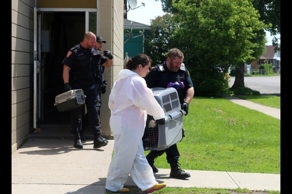 More than 30 cats were removed from a Cummings Street apartment complex on Wednesday.