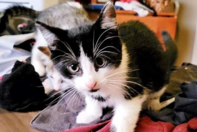 Surrendered cats transferred from Thunder Bay to North Bay (3 Photos)