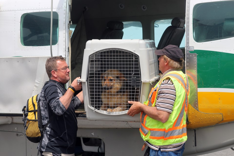 On Tuesday, 13 dogs and five cats arrived in Thunder Bay from the Kitchenuhmaykoosib Inninwug First Nation on their way to Southern Ontario.