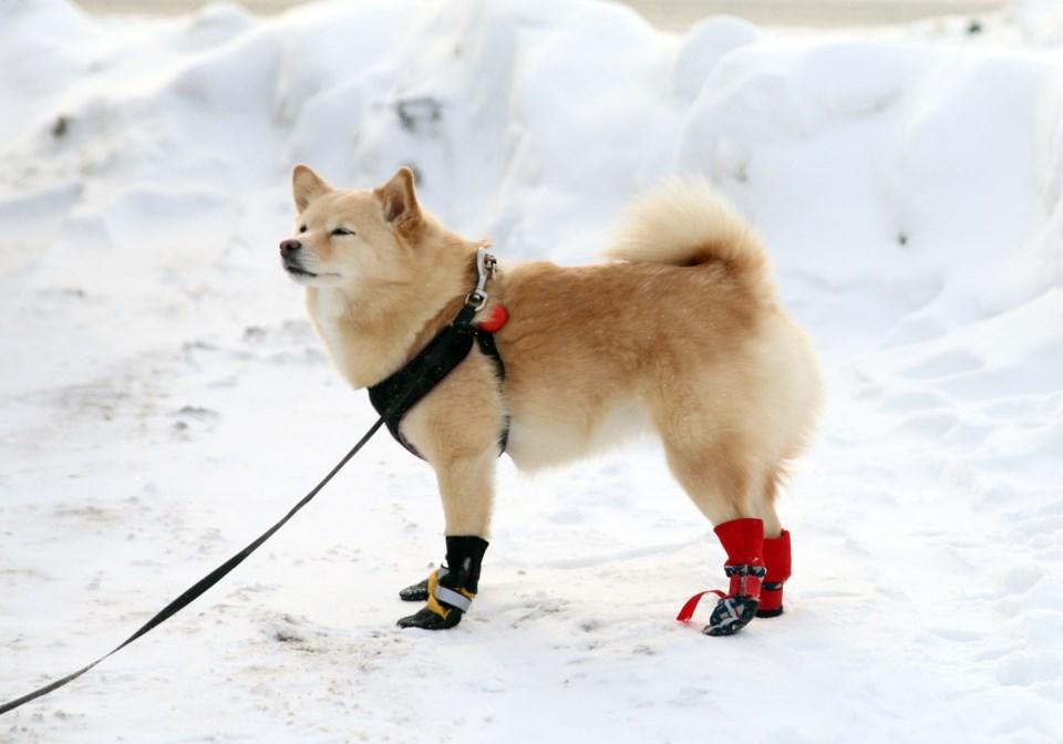 Cold Pets 3