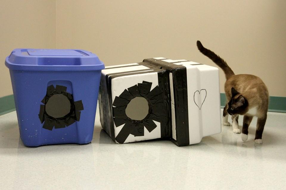 Smokey Cat Shelter