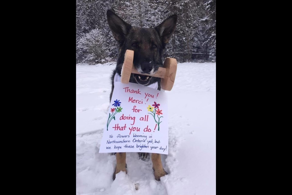 Therapy dog Flynn, owned by Jill Biggs, holds a note expressing thanks to frontline workers (Facebook/St. John Ambulance)