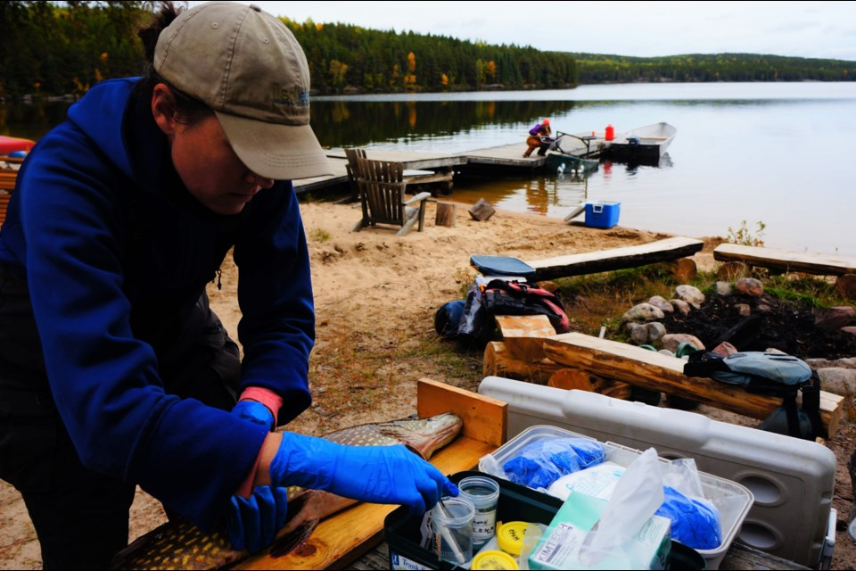 Skeleton crews conducted essential monitoring work at the Experimental Lakes Area during the COVID-19 pandemic. (Image courtesy IISD ELA)