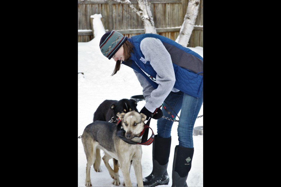Local musher Julia Cross will complete in the two-day, 150-mile Junior Iditarod in Alaska this February. (Photos by Ian Kaufman, Tbnewswatch)