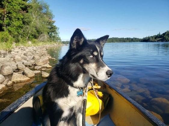 Luna was lost in the bush east of Fort Frances for seven days (Facebook/MichaelandLuna)