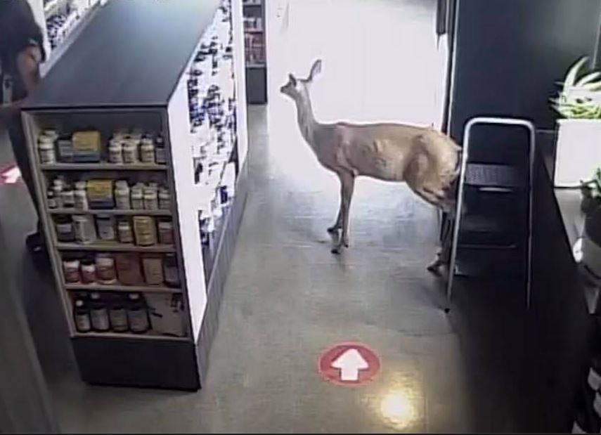 Tim's Whole Health Deer