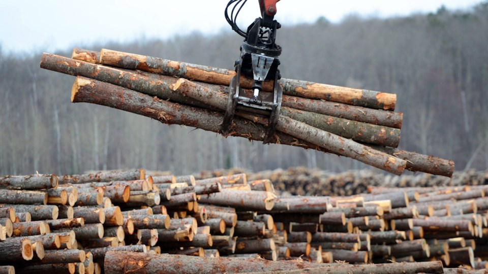 Softwood lumber CP