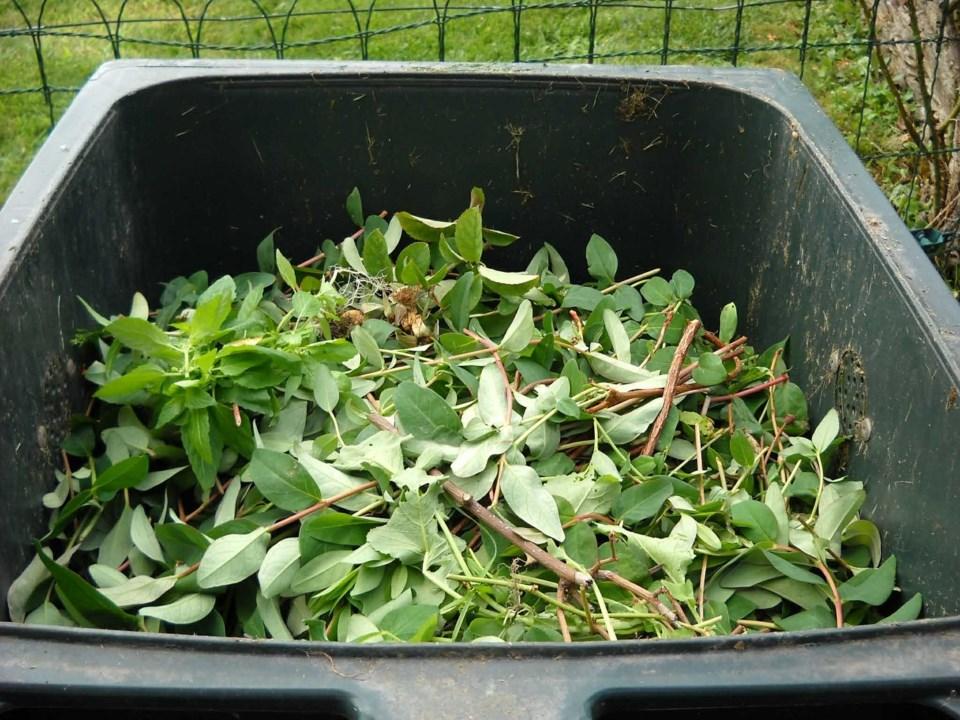 green-waste-486011_1920